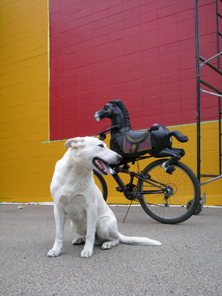 Dog and horse-bike